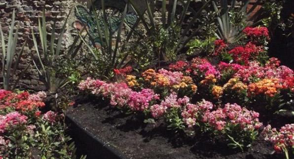 Jardín el La Candelaria
