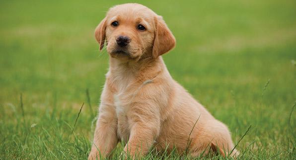 Cosas de perros