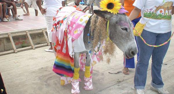 Festival del Burro