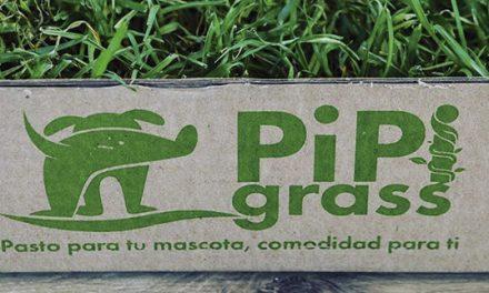 PIPI GRASS